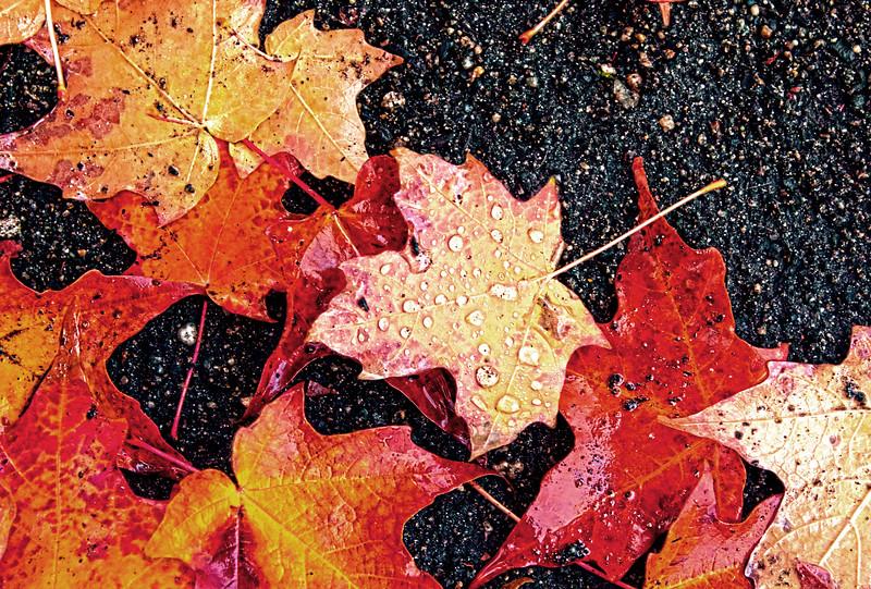 Fall_Colors_HDR8.jpg
