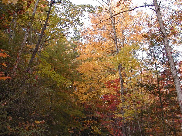 Colors of Autumn along Auger Hole Road Gorges State Park, NC