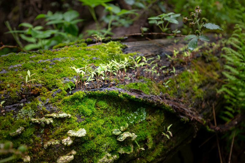 Mike Maney_Rainy Day Landscape-60.jpg