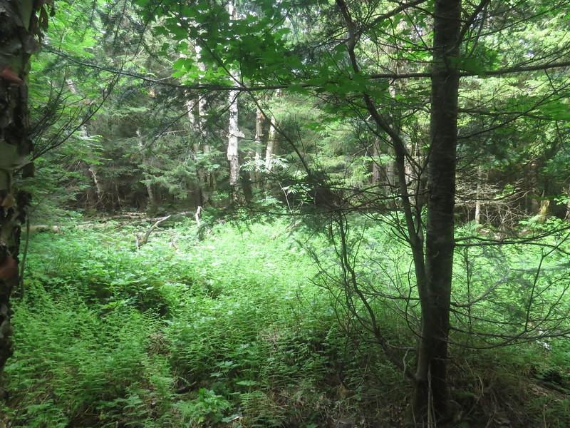 Camp 24-A clearing.JPG
