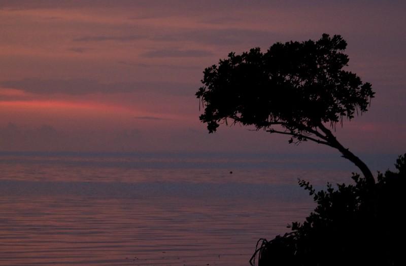 keys sunset mangrove
