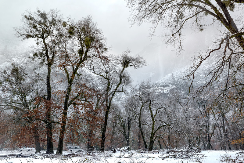 Cooks Meadow in Winter, Yosemite Valley