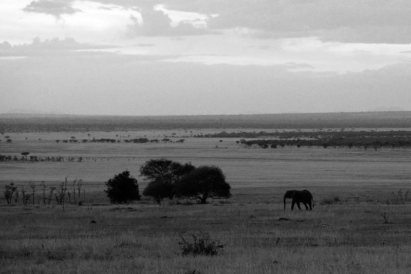 Signature Serengeti........, truly a magical place......