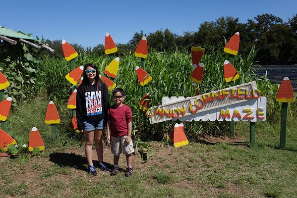 Sweetberry Farm Corn Maze 2013