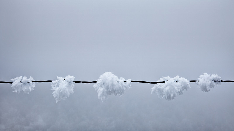 Barbed wire fence with hoarfrost.
