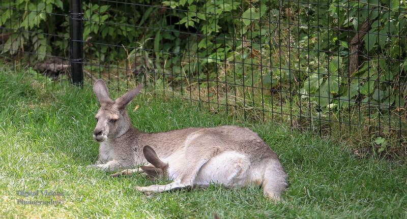 2016-07-17 Fort Wayne Zoo 861LR.jpg