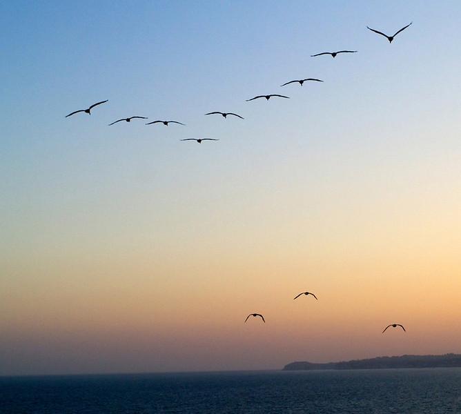 gulls-1079047935-o.jpg