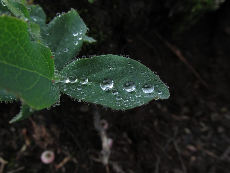 Water Droplets  at Damfino by Alice .jpg