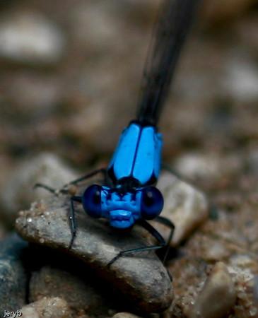 Butterflies & Dragonflies!