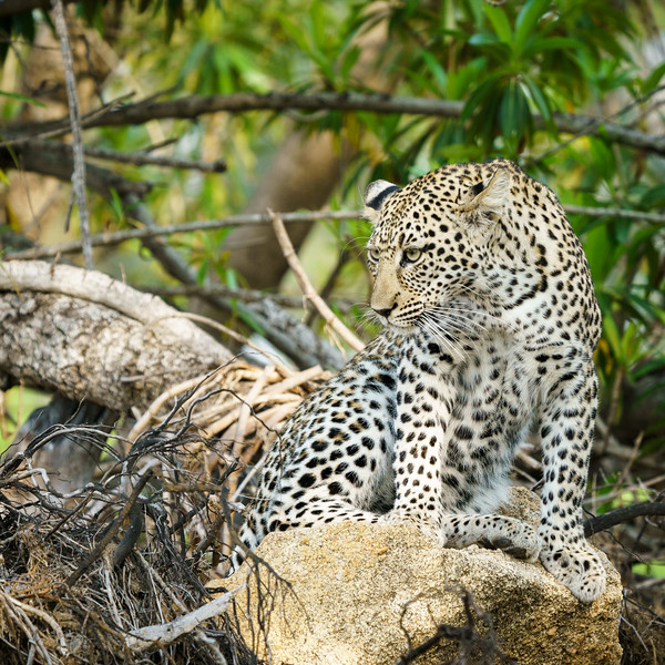 LeopardHills-20171024-1929.jpg