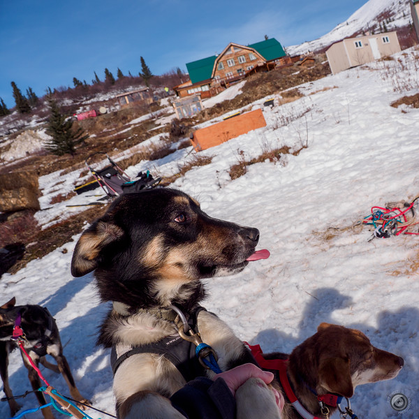 20190326_alaska_trip_alpine_creek_lodge_2530.jpg