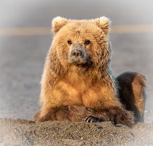 Alaska Bears and Puffins
