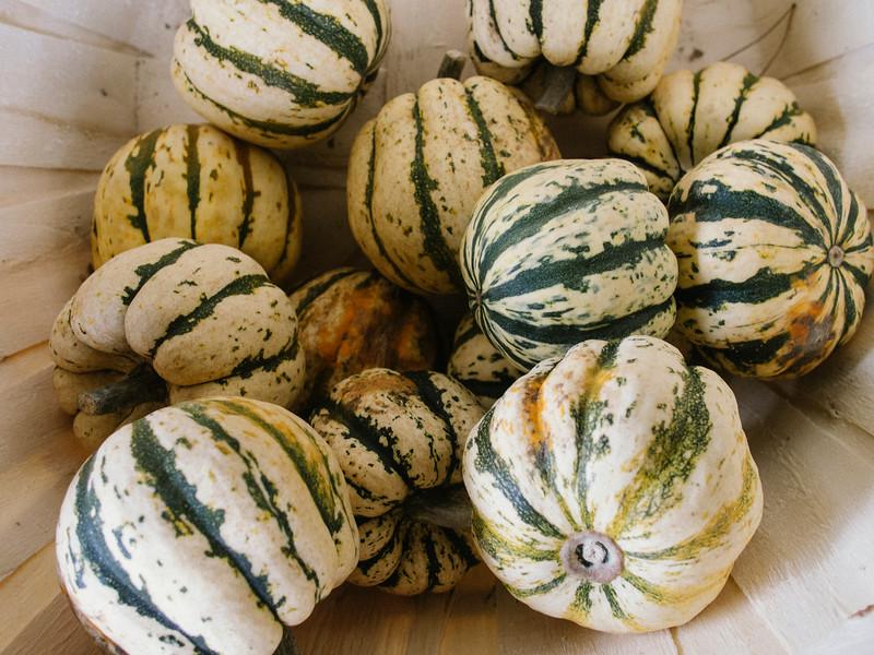 mccully's Hill farm squash 2.jpg