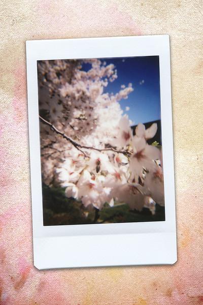 170430_ARD-cherryblossoms_INSTAX05.jpg