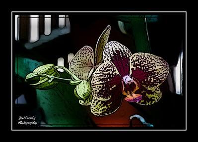 Flowers Stylized