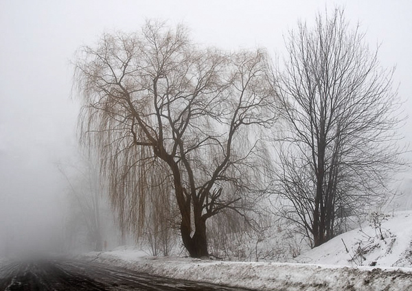 Winter Fog On Petrie Island.jpg