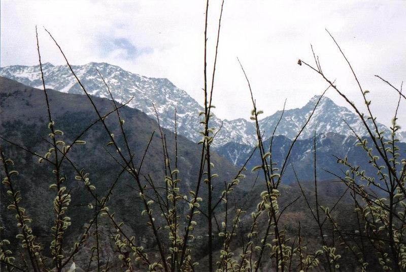 lower Himalayas