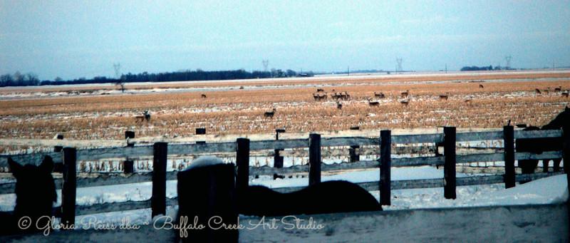 Deer in the field in spring