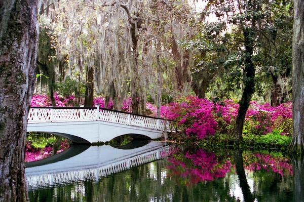 Charleston in Color