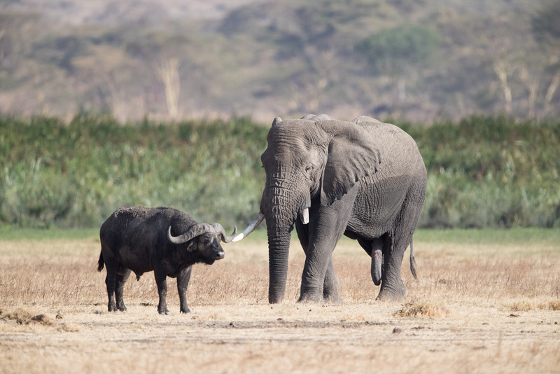 Africa - 101816 - 6368.jpg