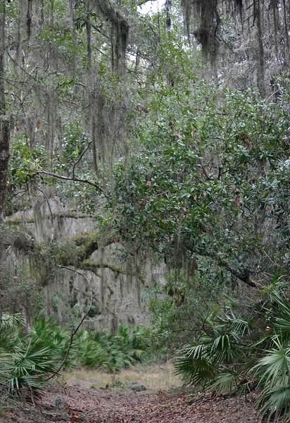 Spanish moss jungle