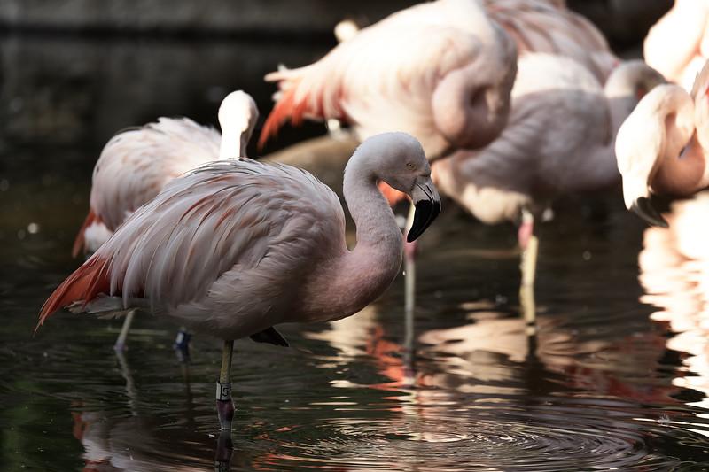 20181030 - Houston Zoo-DSC_0795.jpg