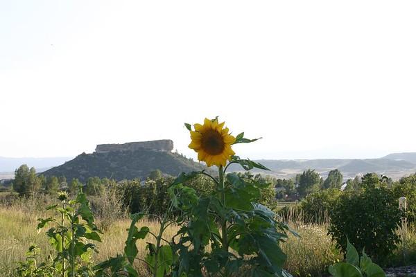 Colorado Yard Flowers