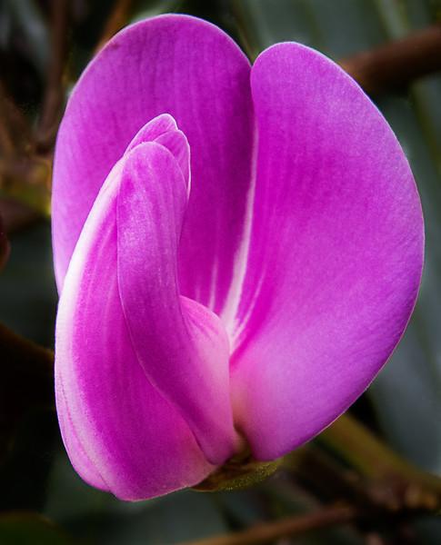 Various Flora - May, 16, 2012