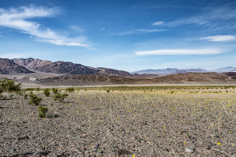 Death-Valley-south-entrance-sunflowers-april-2017.jpg