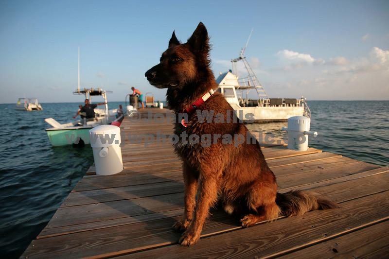 Guard dogRN