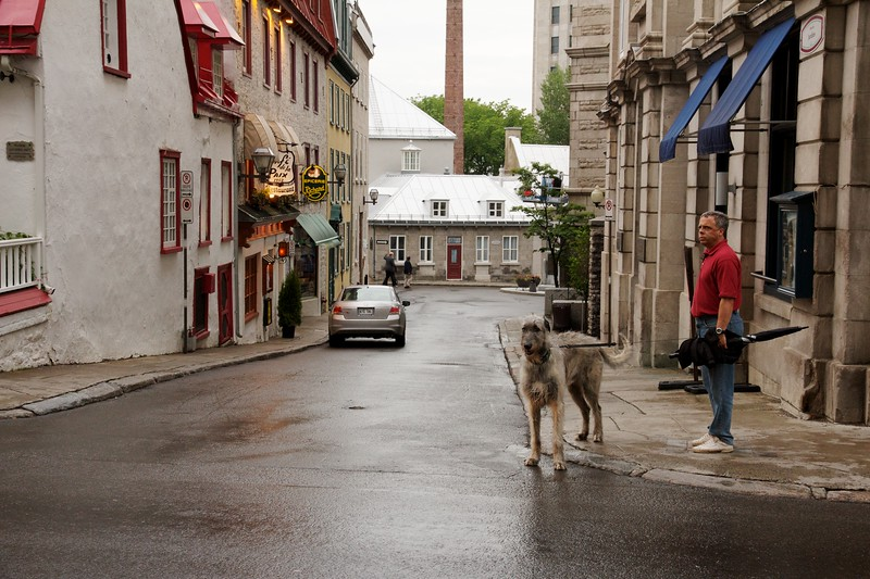 Man with Irish wolfhound. Quebec City, Canada.