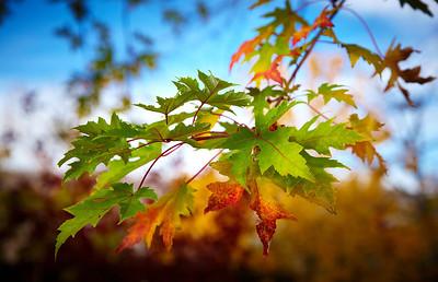 Fall Colors in My Backyard