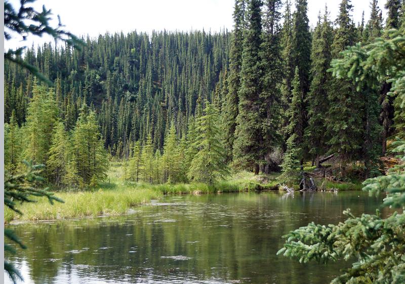 Denali Park's Horseshoe Lake Trail