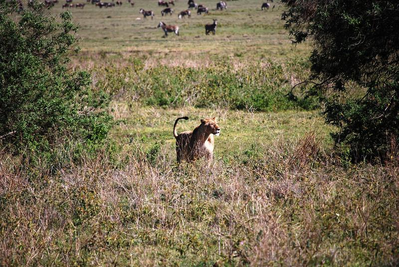 Ngorongoro (86).JPG