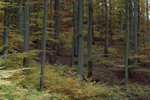 Autumn Walks in Germany