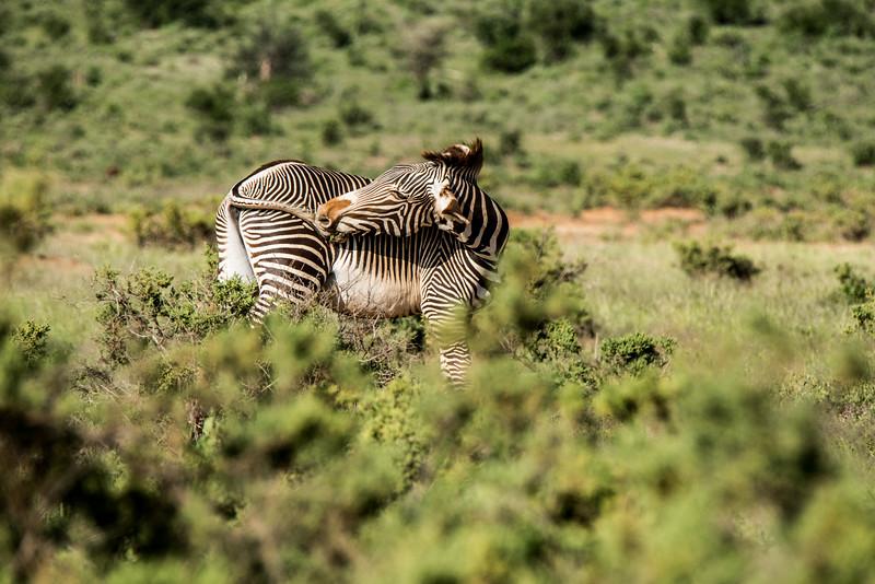 Samburu (1 of 70).jpg