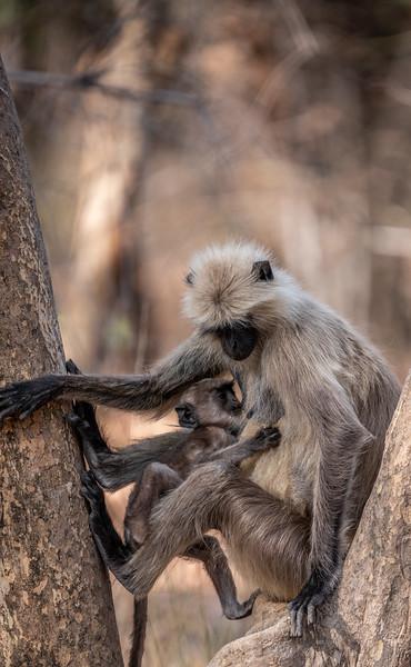 India_April_2019-2251.jpg