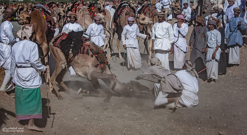 IMG_1330 copy- Camel Race.jpg