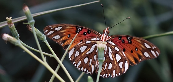 Daniel Stowe Butterflies and Flowers Sept 2008