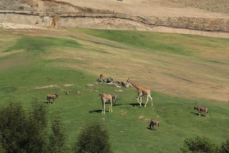 San Diego wild animal pakr 201700051.jpg