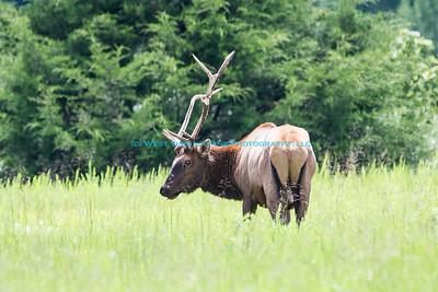 Eastern Kentucky Elk & Outdoor Expo