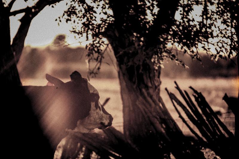 SO Ranch Cowboys - 2012