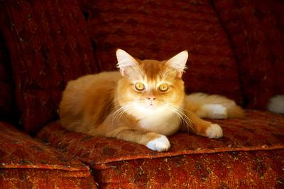Natalia Cat