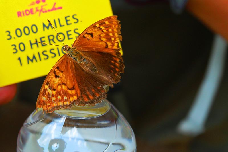 RTF15-Day29-moth_1852.jpg