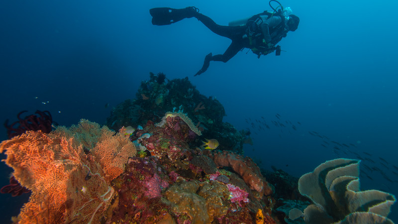 Taken from Kota Janji 2 divesite in Ternate Island, North Maluku, Indonesia during our 8D7N excursion in March 2018