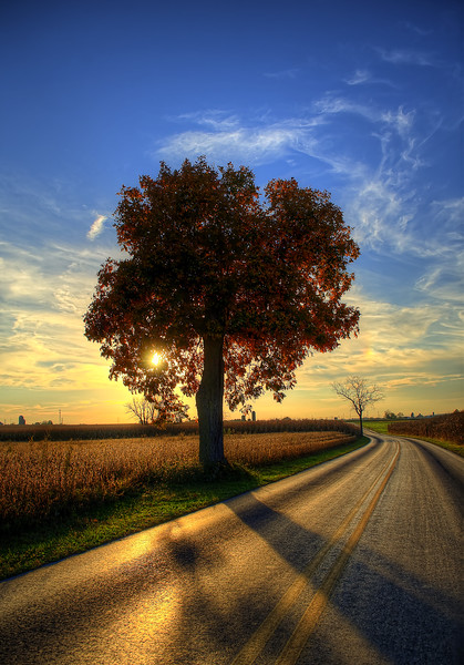 autumn - amishtown road tree(p).jpg