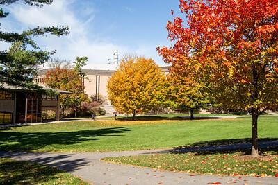 2020 - Campus Fall