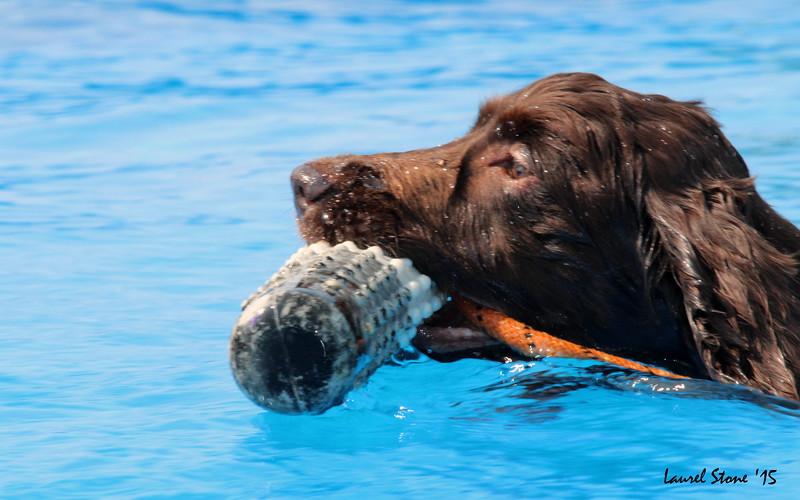 2015.8.21 Dock Dogs Lambeau-042.JPG