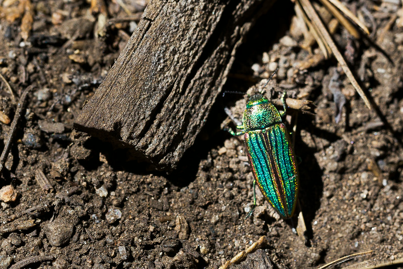 Sequoia_0332.jpg