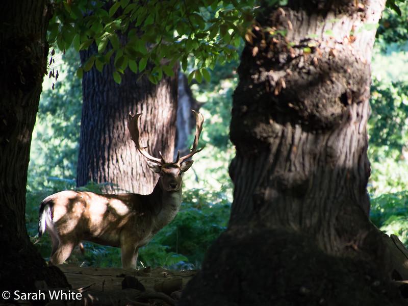 Deer rut_260915_627.jpg